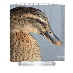 Portrait Of Rouen-mallard Mixed Breed Duck Hen Shower Curtain by Merrimon Crawford