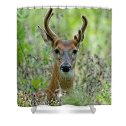 Portriat Of Male Deer Shower Curtain
