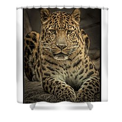 Shower Curtain featuring the photograph Poser by Cheri McEachin