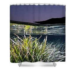 Shower Curtain featuring the photograph Posidonia by Rico Besserdich