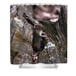 Shower Curtain featuring the photograph Posing #1 by Jeff Severson