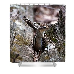 Shower Curtain featuring the photograph Posing #2 by Jeff Severson