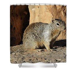 Posing Squirrel Shower Curtain