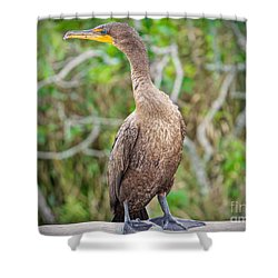 Posing Sea Bird Shower Curtain