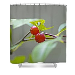Possum Haw Berries Shower Curtain by Kenneth Albin