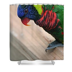 Shower Curtain featuring the photograph Post Position by Laddie Halupa
