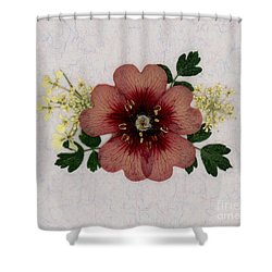 Potentilla And Queen-ann's-lace Pressed Flower Arrangement Shower Curtain