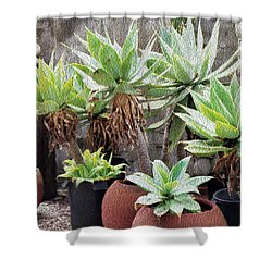 Potted Agave Plants Shower Curtain
