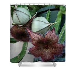 Potted Starfish Shower Curtain by Marna Edwards Flavell
