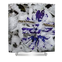 Powder-covered Hyacinth Shower Curtain
