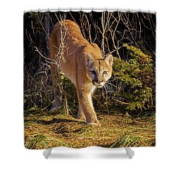 Power And Grace Shower Curtain by Jack Bell