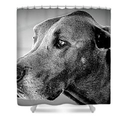 Shower Curtain featuring the photograph Powerful Majesty by Barbara Dudley
