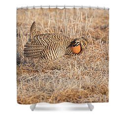 Shower Curtain featuring the photograph Prairie Chicken 10-2015 by Thomas Young