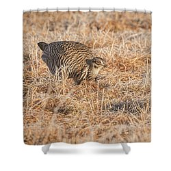 Shower Curtain featuring the photograph Prairie Chicken 11-2015 by Thomas Young