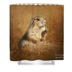 Shower Curtain featuring the photograph Prairie Dog Conversation by Clare VanderVeen