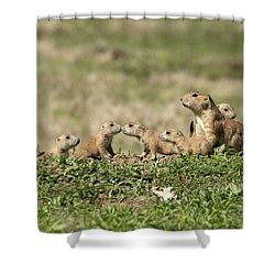Prairie Dog Family 7270 Shower Curtain