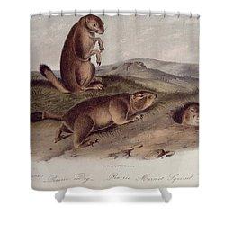 Prairie Dog Shower Curtain by John James Audubon