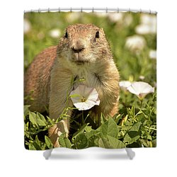 Prairie Dog Shower Curtain by Nancy Landry