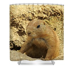 Prairie Dog Peek Shower Curtain