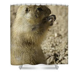 Shower Curtain featuring the photograph Prairie Dog Portrait by Anne Rodkin