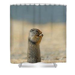 Prairie Dog Shower Curtain by Sebastian Musial