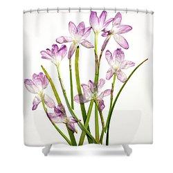 Prairie Rain Lily Shower Curtain
