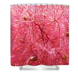 Prairie Rose Shower Curtain