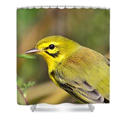 Shower Curtain featuring the photograph Prairie Warbler by Kathy Gibbons
