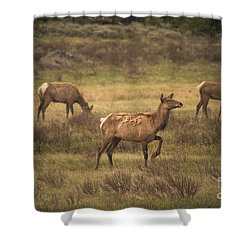 Shower Curtain featuring the photograph Prancing Elk by Robert Bales