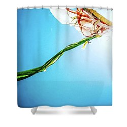 Prayer Flags Blowing In The Wind Shower Curtain