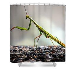 Praying Mantis  Shower Curtain by Bob Orsillo