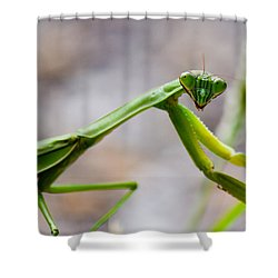 Praying Mantis Looking Shower Curtain by Jonny D