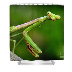 Shower Curtain featuring the photograph Praying Mantis On Watch by Myrna Bradshaw