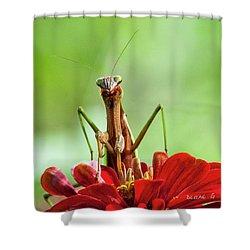 Praying Mantis On Zinnia Shower Curtain