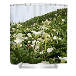 Shower Curtain featuring the photograph Preaching To The Choir by Marie Neder