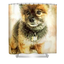 Precious Pomeranian Shower Curtain