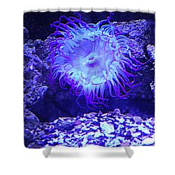 Predatory Terrestrial Sea Anemone Shower Curtain
