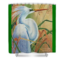 Shower Curtain featuring the drawing Preening Egret by Peter Piatt