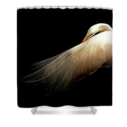 Preening Egret Shower Curtain