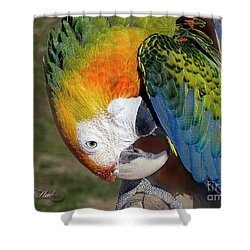 Preening Macaw Shower Curtain by Melissa Messick