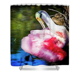 Preening Spoonbill Shower Curtain