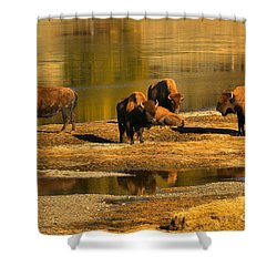 Shower Curtain featuring the photograph Preparing To Cross The Yellowstone River by Adam Jewell
