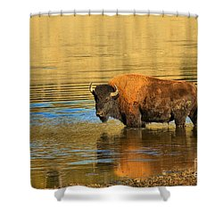 Shower Curtain featuring the photograph Preparing To Swim The Yellowstone by Adam Jewell