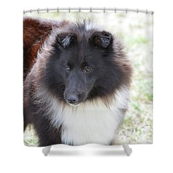 Pretty Black And White Sheltie Dog Shower Curtain