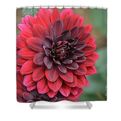 Pretty Blooming Red Dahlia Flower Blossom Shower Curtain