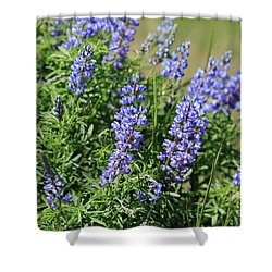 Pretty Blue Flowers Of Silky Lupine Shower Curtain by Louise Heusinkveld
