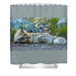 Shower Curtain featuring the photograph Pretty Boy Fox In Spring by Yeates Photography