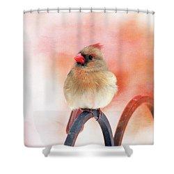 Pretty Cardinal Shower Curtain