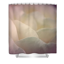 Shower Curtain featuring the photograph Pretty Cream Rose by The Art Of Marilyn Ridoutt-Greene