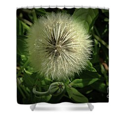 Pretty Fluffy Seedhead Shower Curtain